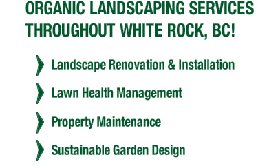 Organic Landscaping Services Throughout White rock, BC! Landscape renovation & installation, property maintenance, sustainable landscape design, lawn health management.