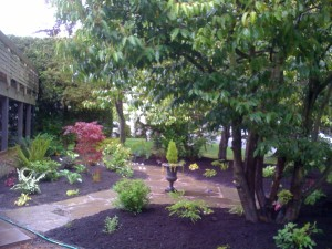 Flagstone pathway in Richmond - Front retaining garden in Walnut grove : BEFORE - Ladybug Landscaping Ltd