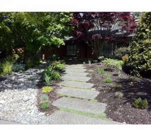Another view of the Frontyard without lawn in Surrey : AFTER - Ladybug Landscaping Ltd