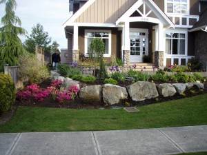A beautiful lawn with large rocks for the Haring's - Ladybug Landscaping